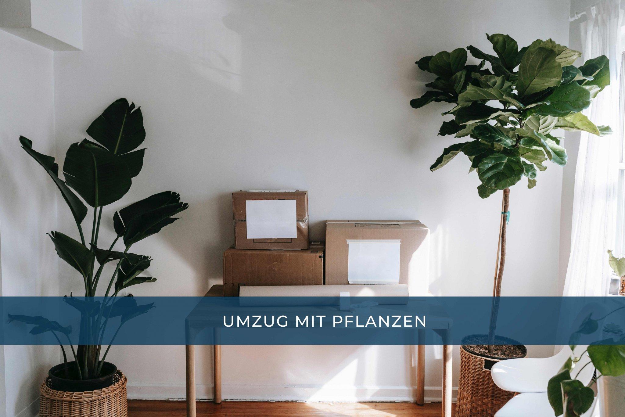 umzug_mit_pflanzen_0f283.jpg